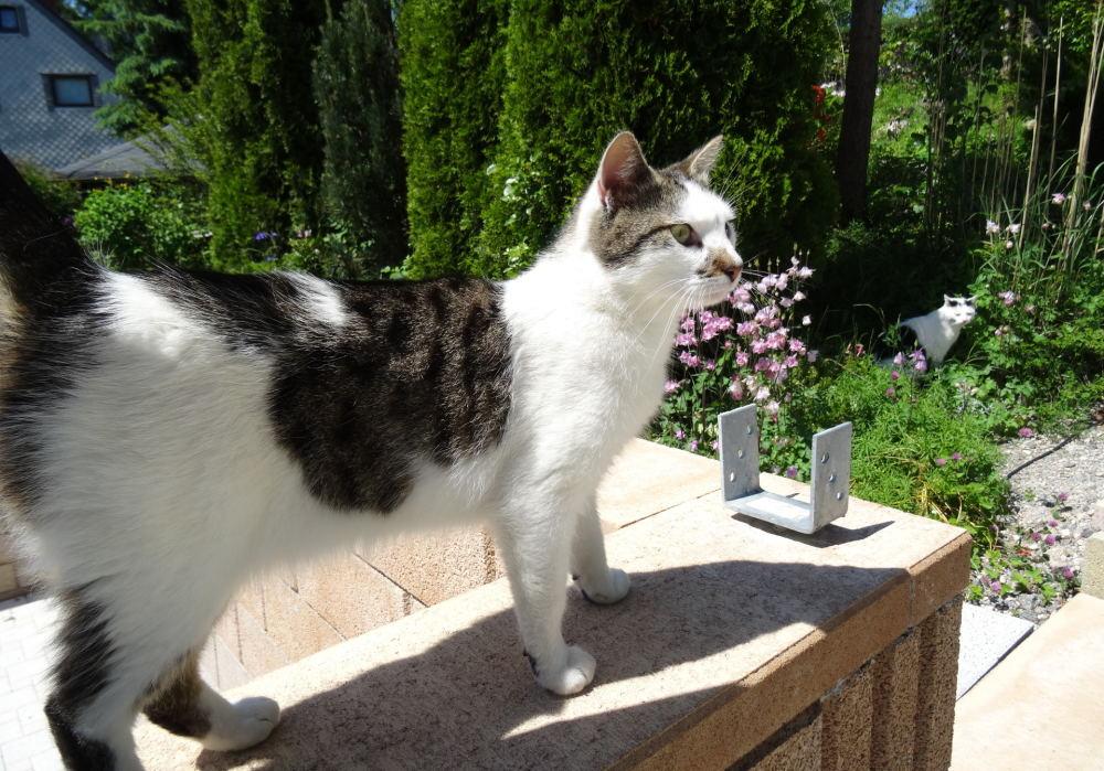 Meine Katze Luca (1)