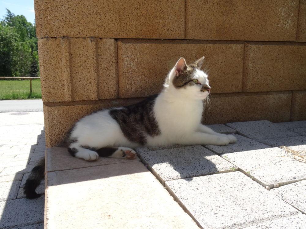 Meine Katze Luca (2)