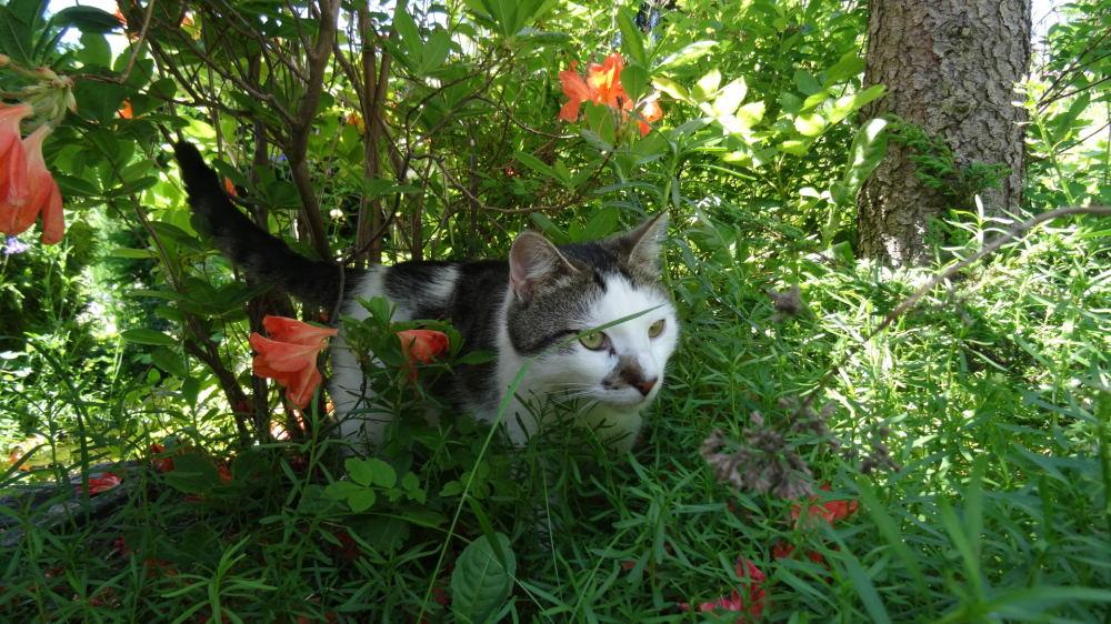 Meine Katze Luca (3)