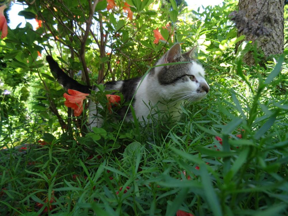 Meine Katze Luca am 04. Juni 2015 (4)