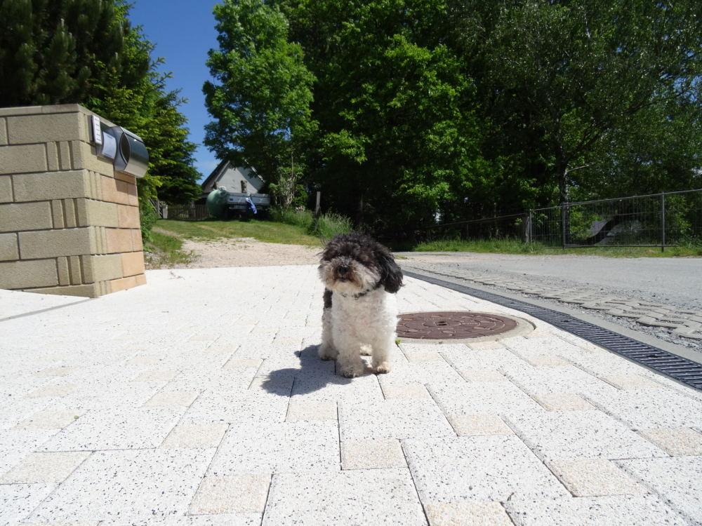 Mein Hund Timmi
