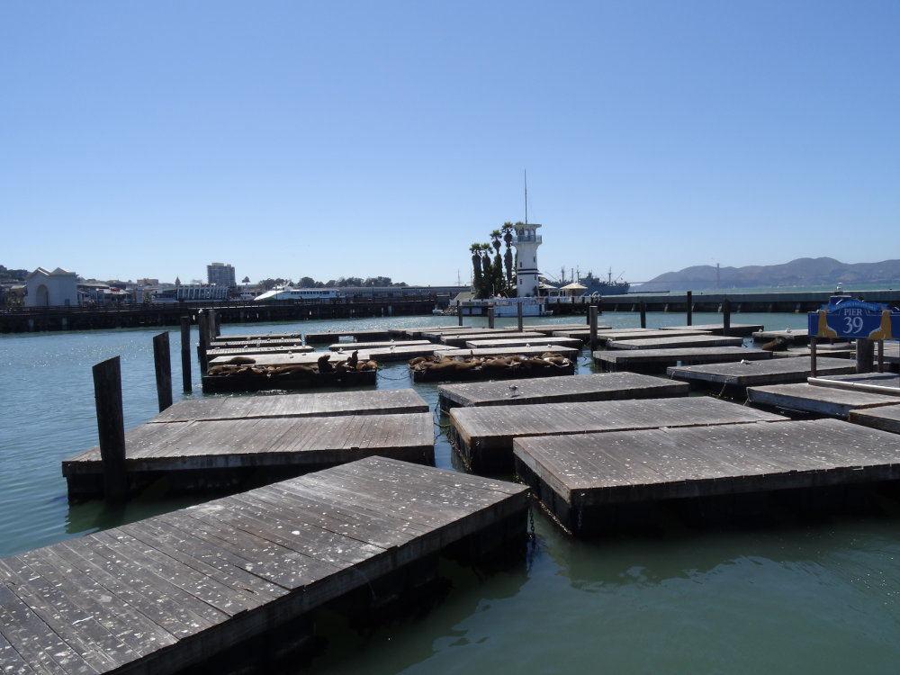 Pier 39 mit Seelöwen