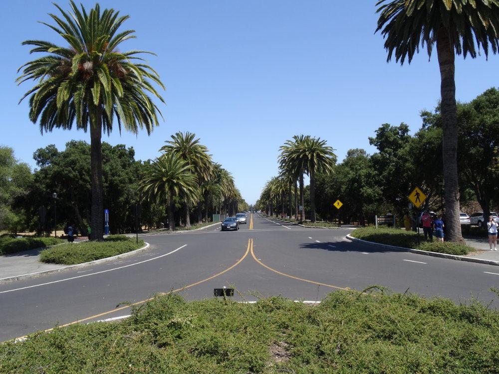 Zufahrt zur Stanford Universität. Auf dem Foto ist die Universität hinter mir, während man gerade aus die mit Palmen umgebene Zufahrtsstraße sieht.