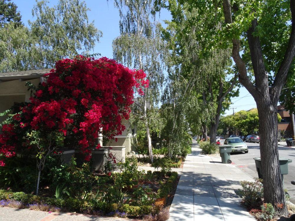 Eine Straße in Palo Alto