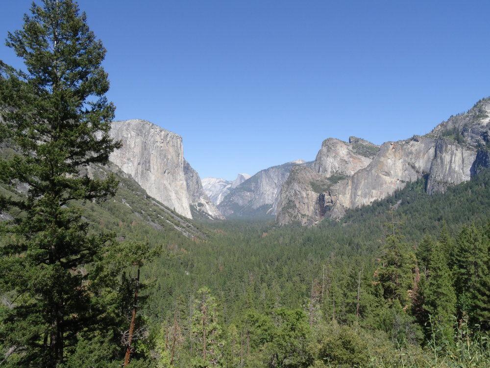 Half Dome im Hintergrund - Yosemite Nationalpark