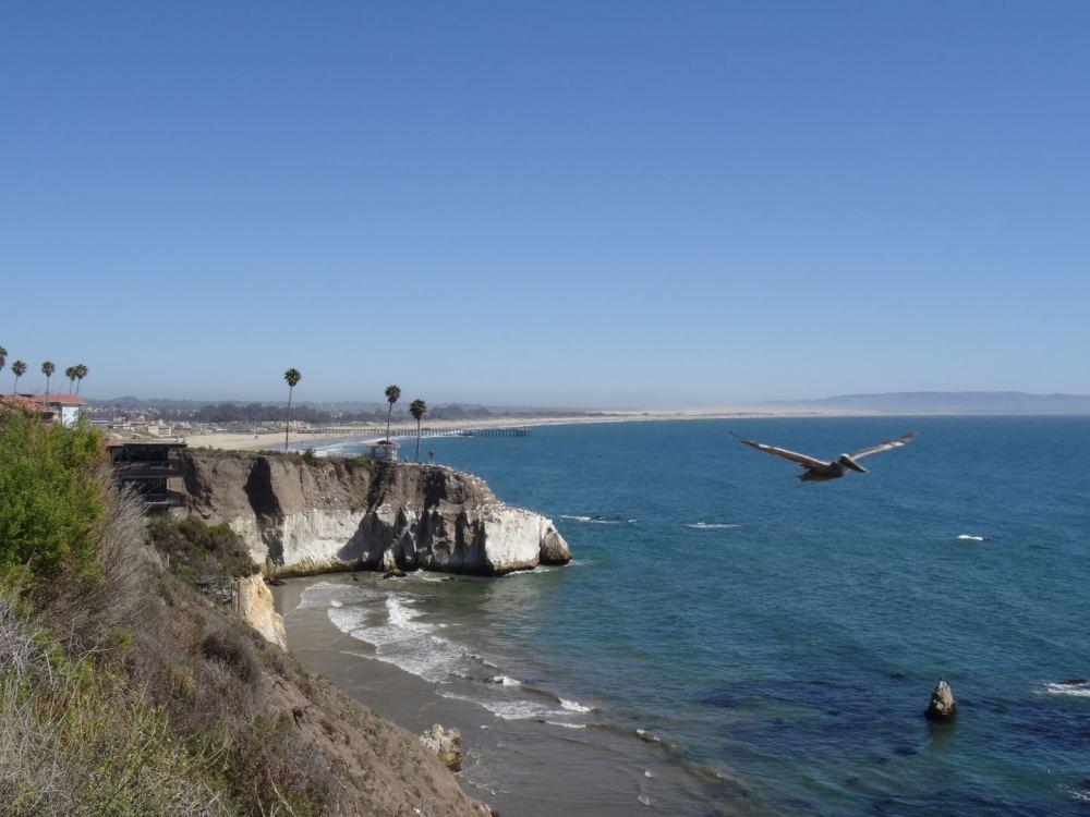 Pelikan an der Kalifornischen Pazifikküste am 14.08.2015