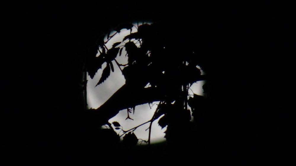 Baumast und Blätter verdecken Vollmond (4K, 2160p, 16:9, Querformat, 02.06.2015, Erzgebirge)