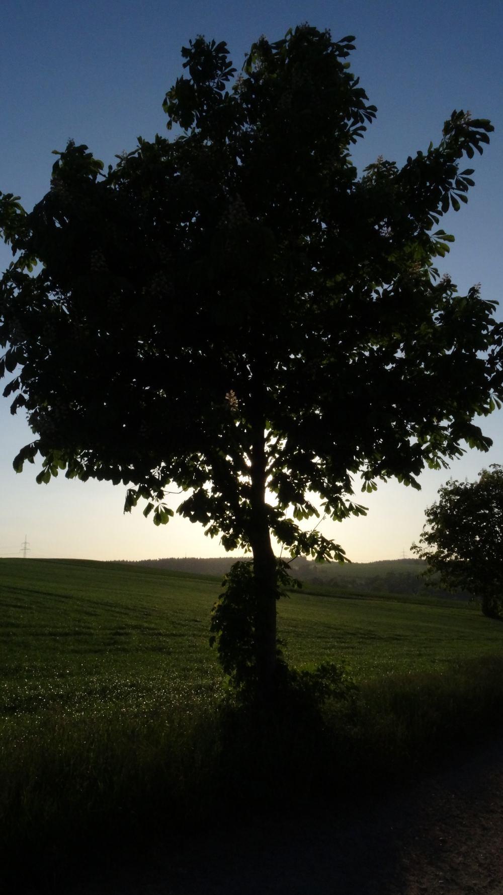 Baum verdeckt Sonnenuntergang (4K, 2160p, 16:9, Hochformat, 05.06.2015, Erzgebirge)
