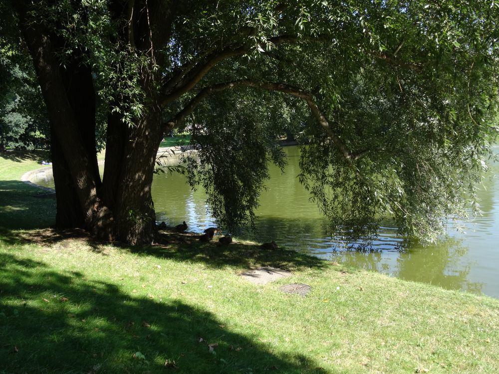 Teich hinter dem Dresdener Zwinger