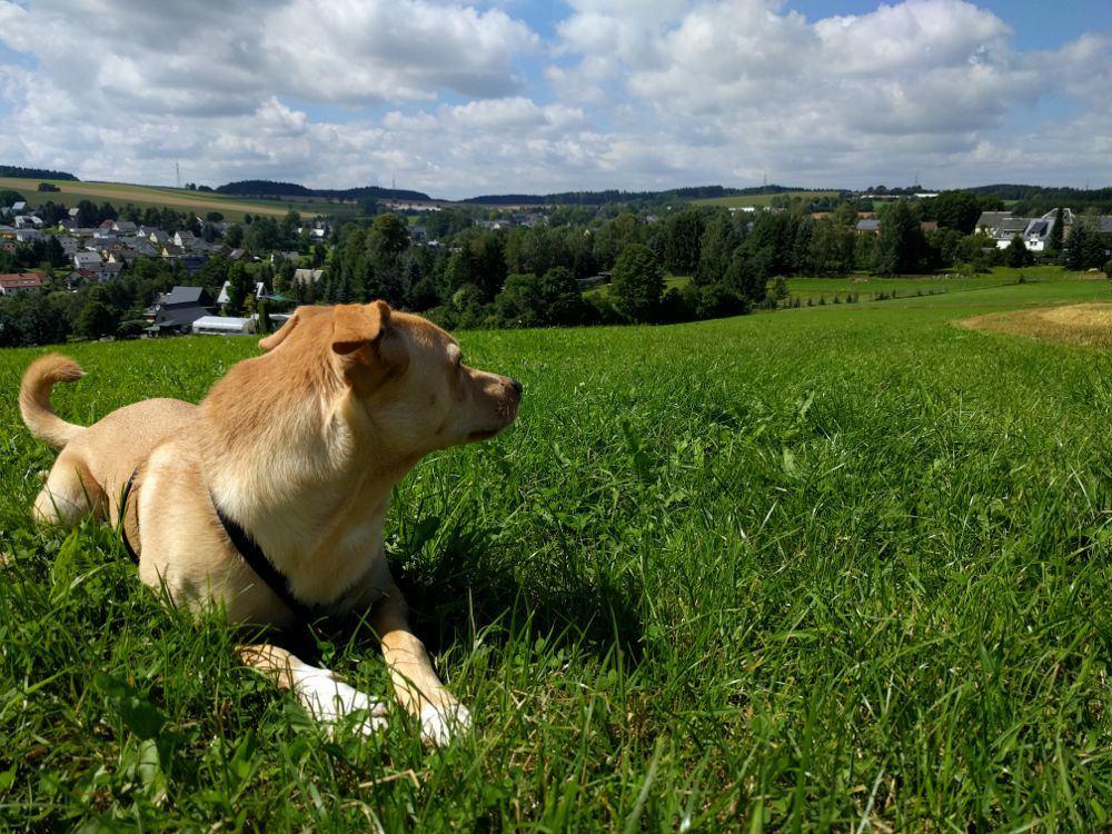 Spazieren mit Ares im Erzgebirge (13. August 2016)