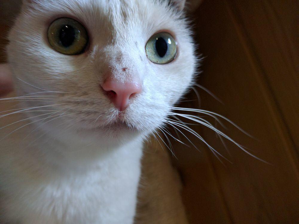 Meine Katze starrt in die Kamera