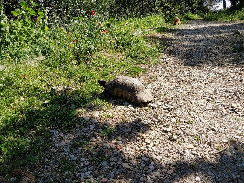 Schildkröten in freier Natur