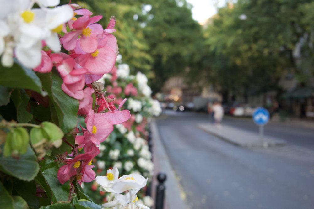 Budapest Oktober 2018 - Blumen vor der großen Synagoge